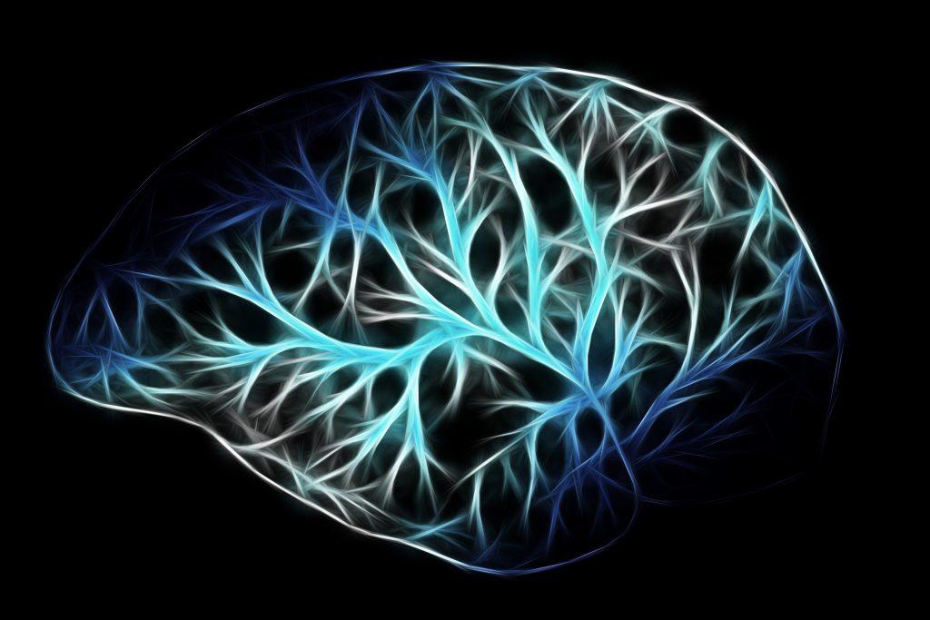 brain-2676370